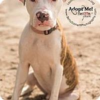 Adopt A Pet :: Duncan - Tallahassee, FL