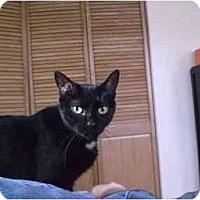 Adopt A Pet :: Magdelena - Lombard, IL
