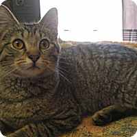 Adopt A Pet :: Caesar - Fairbury, NE