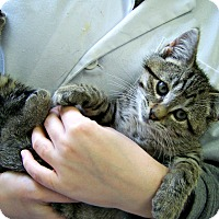Adopt A Pet :: The Professor - Toledo, OH