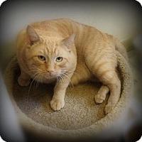 Adopt A Pet :: Loki - Pekin, IL