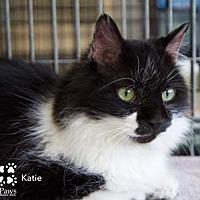 Adopt A Pet :: Katie - Merrifield, VA