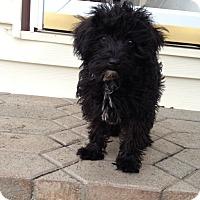 Adopt A Pet :: Maui - Alden, NY