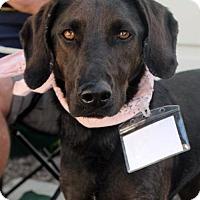 Adopt A Pet :: Beans - Adopted! - San Diego, CA