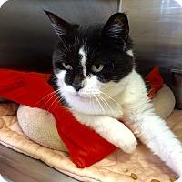 Adopt A Pet :: Daisy - Lunenburg, MA