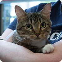 Adopt A Pet :: Anastasia - New York, NY