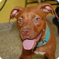 Adopt A Pet :: Poppy - Bradenton, FL