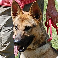 Adopt A Pet :: Bella #6 AD 07-30-16 - Preston, CT