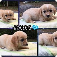 Adopt A Pet :: Decatur - Hagerstown, MD