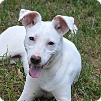 Adopt A Pet :: Dixie Rose~meet me~ - Glastonbury, CT