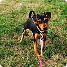Adopt A Pet :: Wilma Flintstone