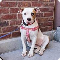 Adopt A Pet :: Estrada - Los Banos, CA