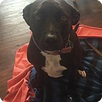 Adopt A Pet :: P'nut - Sacramento, CA