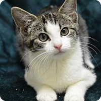 Adopt A Pet :: Shutter Fly	161704 - Atlanta, GA