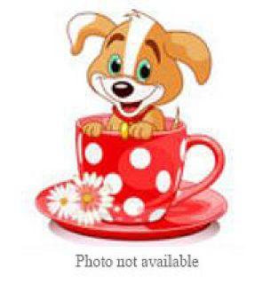 Pit Bull Terrier Mix Puppy for adoption in San Bernardino, California - URGENT ON 11/17 San Bernardino