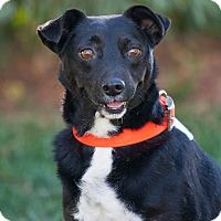 Adopt A Pet :: Kess - Washoe Valley, NV