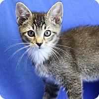 Adopt A Pet :: PJ - Winston-Salem, NC