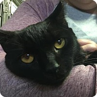 Adopt A Pet :: Forest - Voorhees, NJ