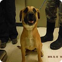 Adopt A Pet :: A572073 - Oroville, CA
