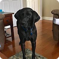 Adopt A Pet :: Guinness - Warrington, PA