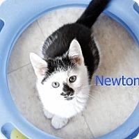 Adopt A Pet :: Newton - Polson, MT