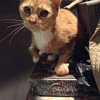 Adopt A Pet :: Christen - Lorain, OH