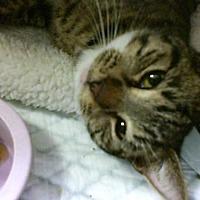 Adopt A Pet :: Figs - Philadelphia, PA
