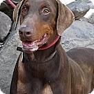 Adopt A Pet :: Chaos