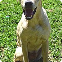 Adopt A Pet :: Hank - Silsbee, TX