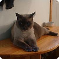 Adopt A Pet :: *Artemis - Winder, GA