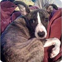 Adopt A Pet :: Liza - Fowler, CA