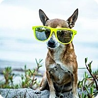 Adopt A Pet :: Poncho - Davie, FL