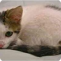 Adopt A Pet :: Melrose - Davis, CA