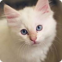 Adopt A Pet :: Frank - Irvine, CA