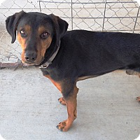 Adopt A Pet :: Rowdy - Yerington, NV