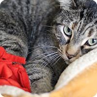 Adopt A Pet :: Hollis Berry - Chicago, IL