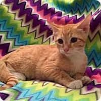 Adopt A Pet :: Lou Malnati - Addison, IL