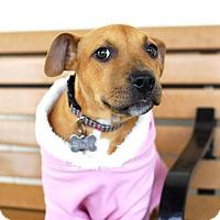 Adopt A Pet :: Sienna-Adopted! - Detroit, MI