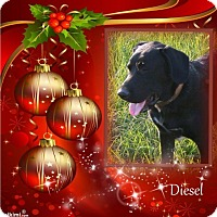 Adopt A Pet :: Diesel - Crowley, LA