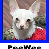 Adopt A Pet :: PeeWee - Plano, TX