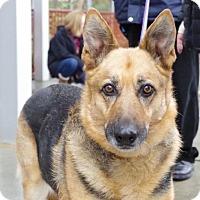 Adopt A Pet :: Coco - Greensboro, NC