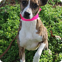 Adopt A Pet :: Hannah - Starkville, MS