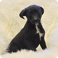 Adopt A Pet :: Montgomery - Groton, MA