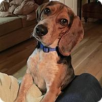 Adopt A Pet :: PJ - Homewood, AL