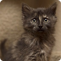 Adopt A Pet :: SophiaM - North Highlands, CA