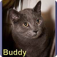 Adopt A Pet :: Buddy - Aldie, VA