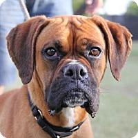 Adopt A Pet :: Zuki - Phoenix, AZ