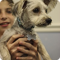 Adopt A Pet :: Levi - Jupiter, FL