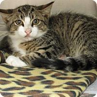 Adopt A Pet :: Tiny - Windsor, VA