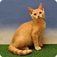 Adopt A Pet :: DITTO - Naples, FL
